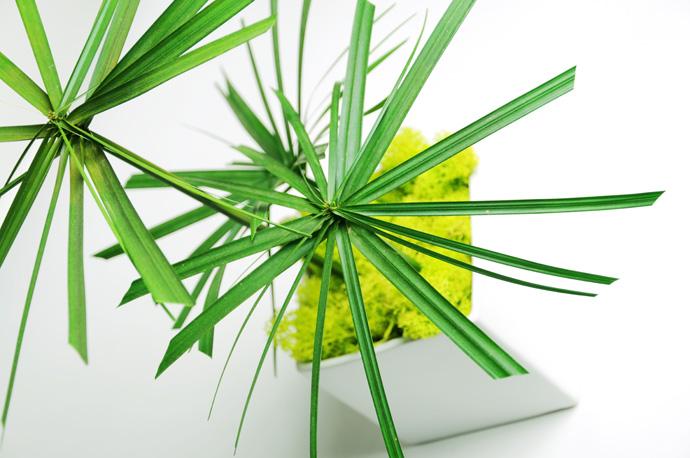 linfadecor piante stabilizzate